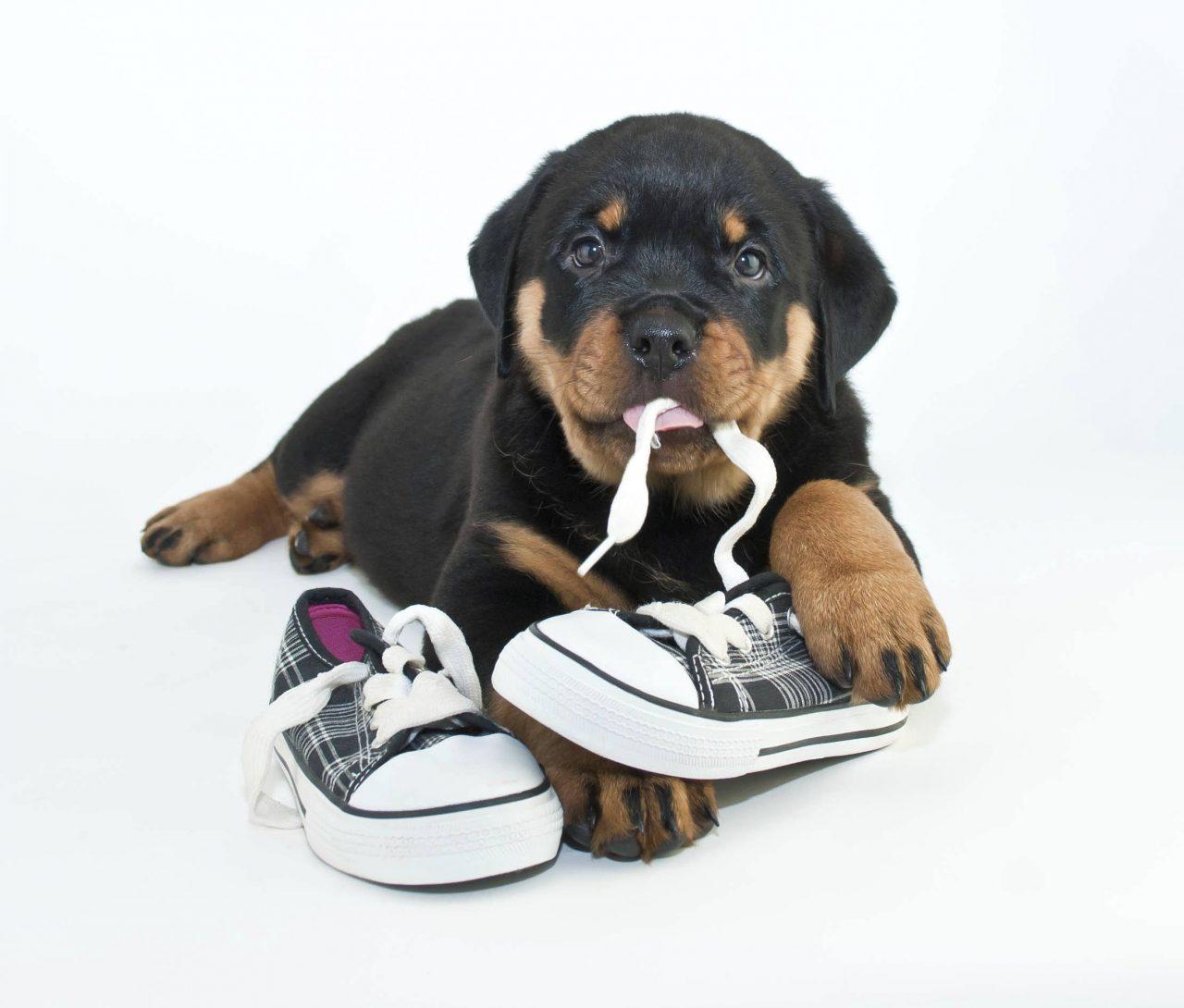https://hundehelse.no/wp-content/uploads/2020/10/My-Shoes-000047966746_Medium-1280x1090.jpg