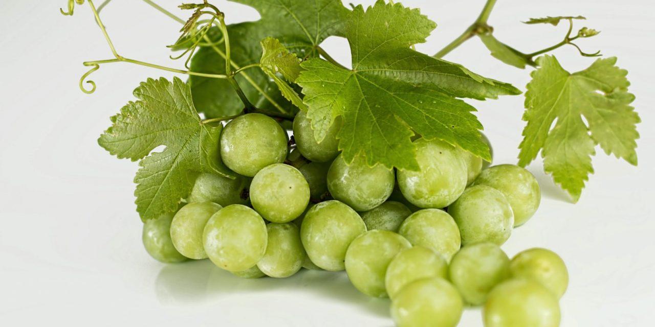 https://hundehelse.no/wp-content/uploads/2020/10/grapes-582207-1280x640.jpg