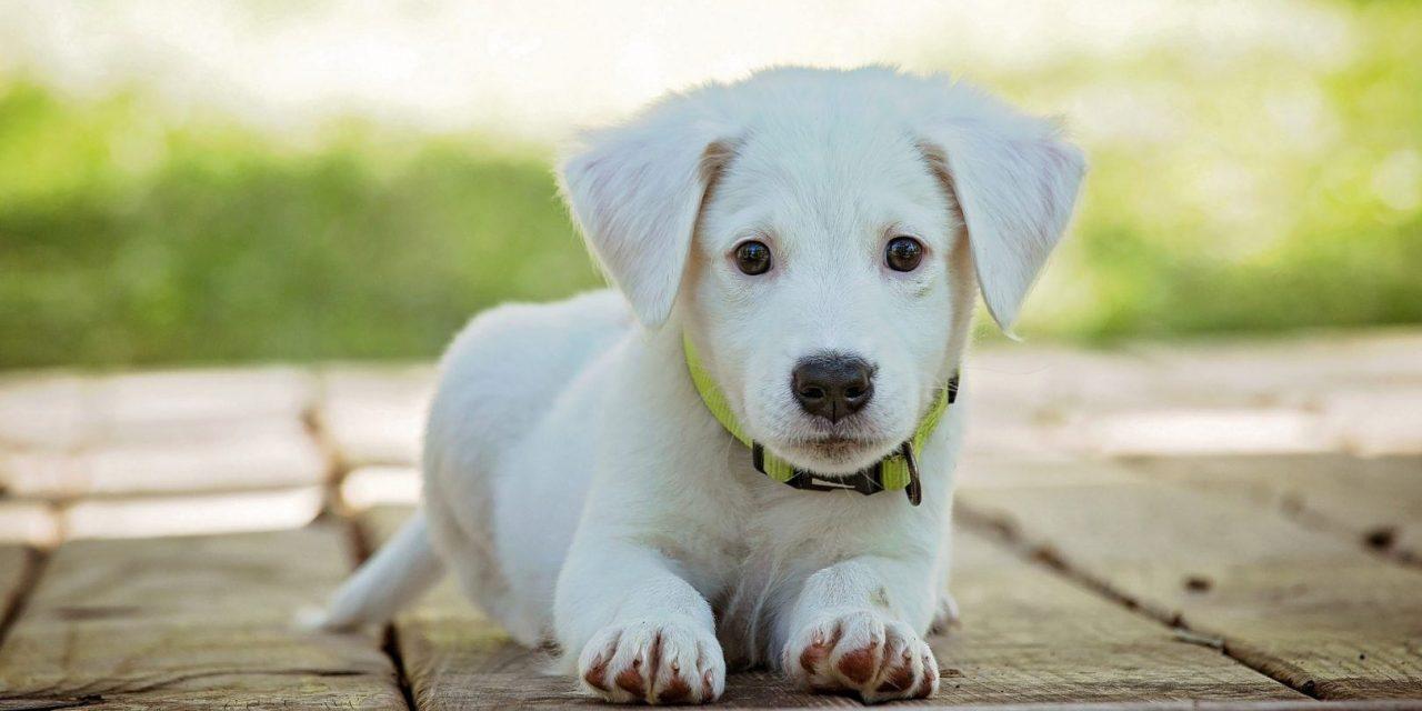 https://hundehelse.no/wp-content/uploads/2020/10/puppy-1903313_1920-1280x640.jpg